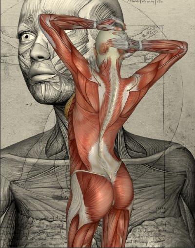Körper1