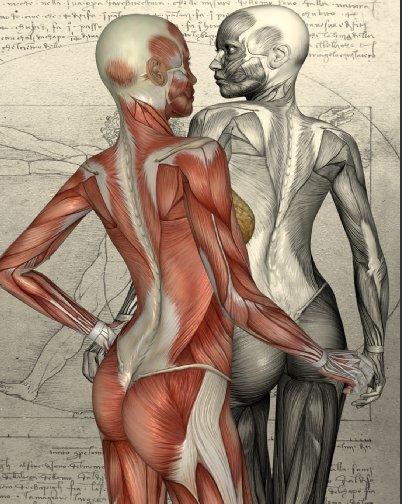 Körper3