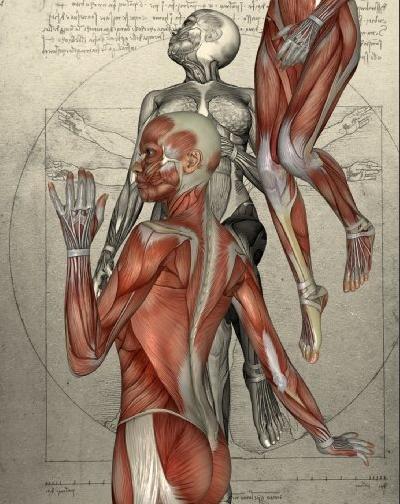 Körper4