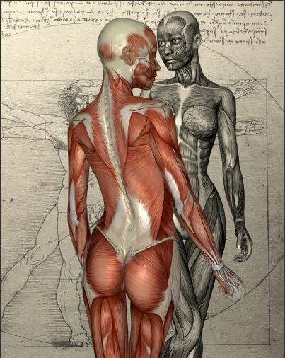 Körper5