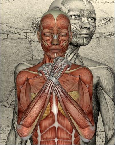 Körper6